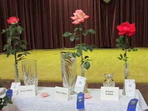2013 District Show Winners